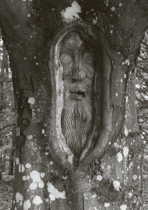 tree-face-167490_1280BW